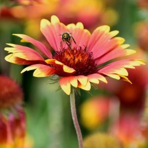 Včela letí dál