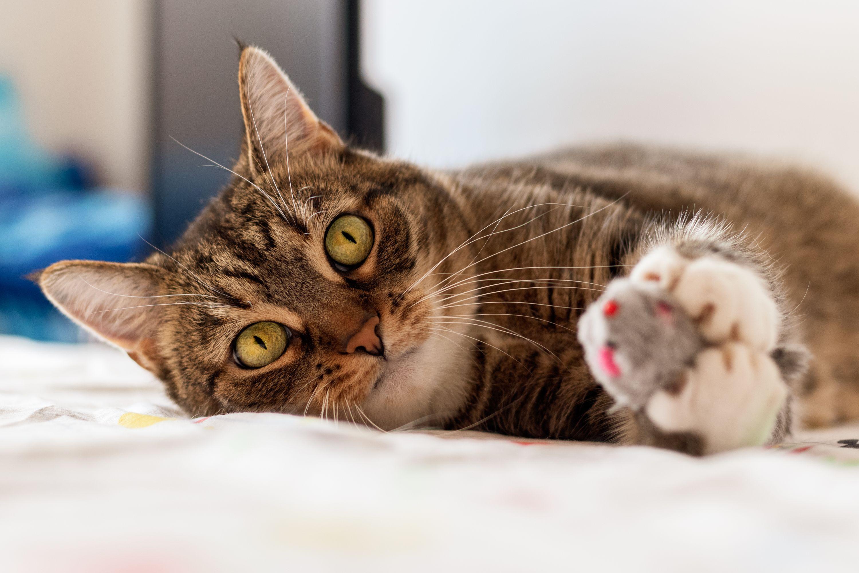 Kočka - myš