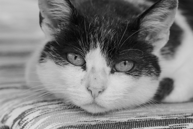Kočky :)