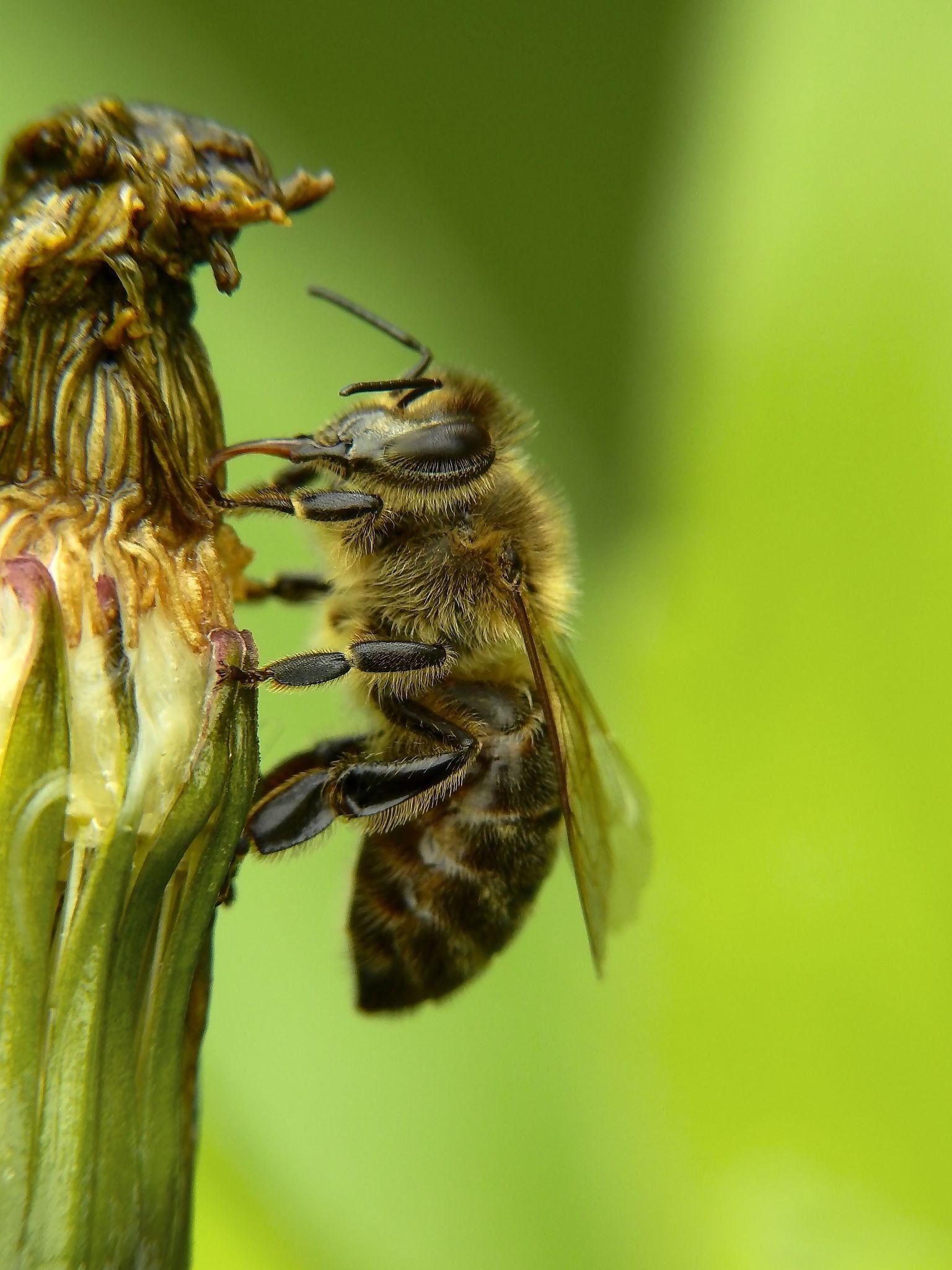 Žíznivá včelka