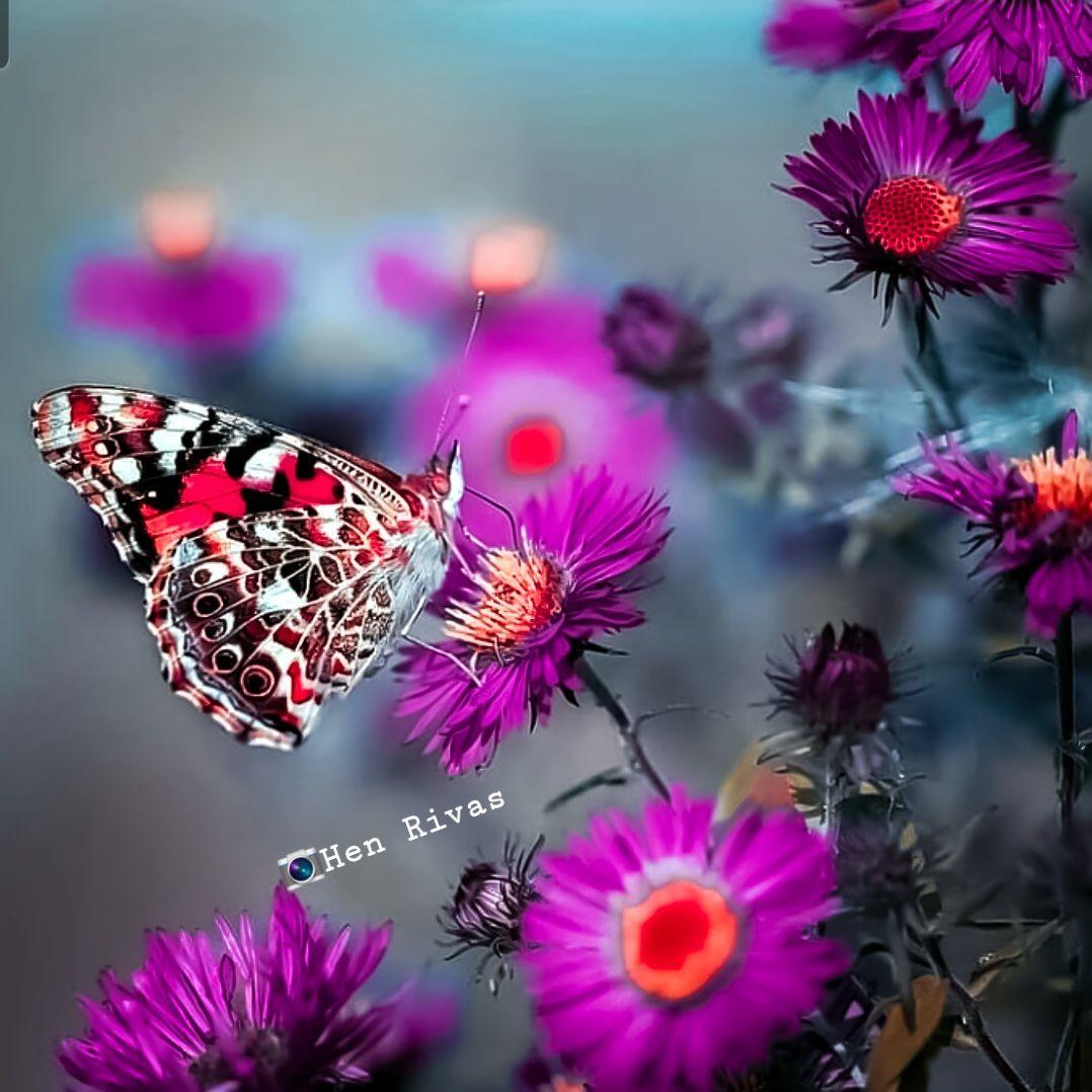 La belleza de las mariposa
