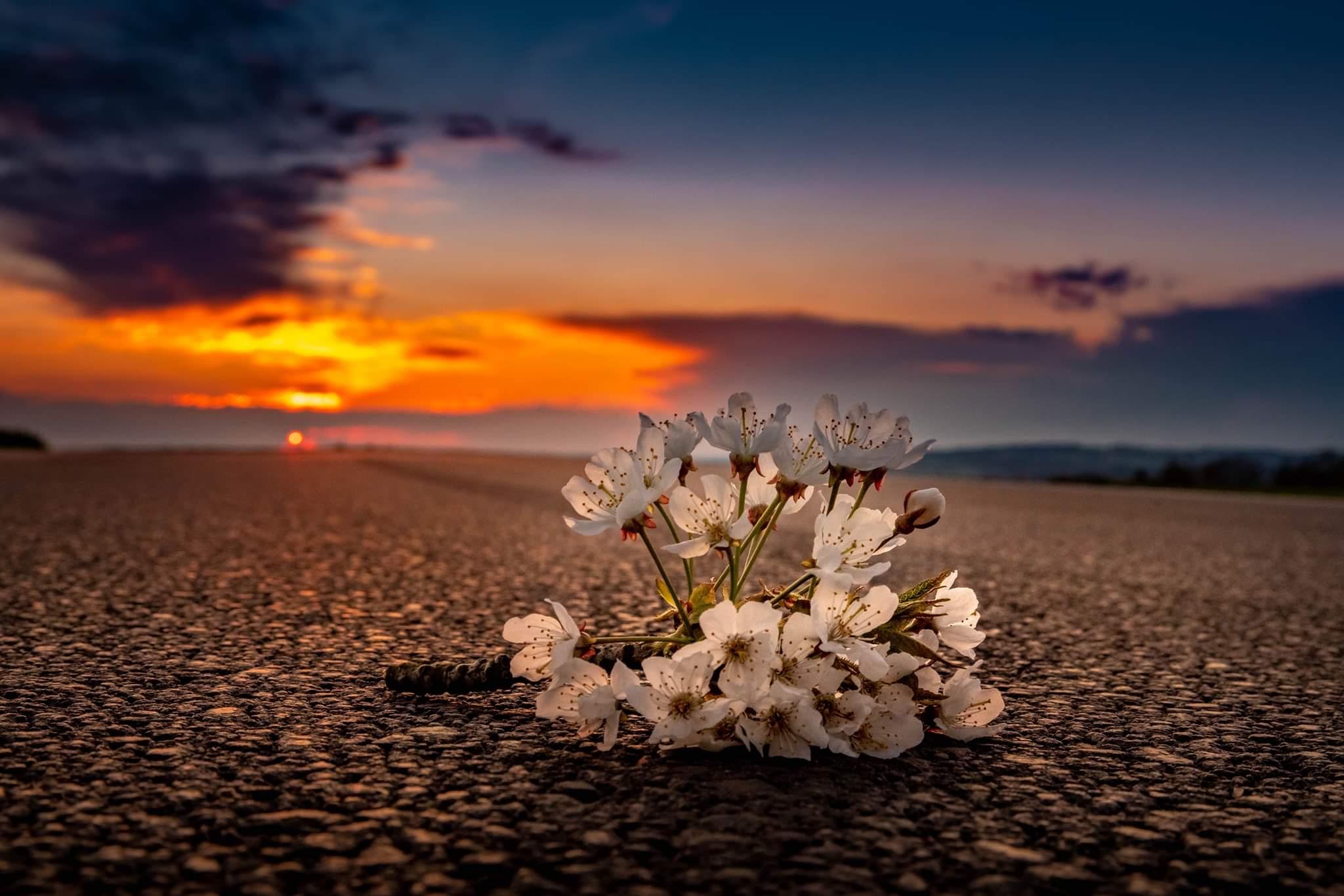 Květnové květy..
